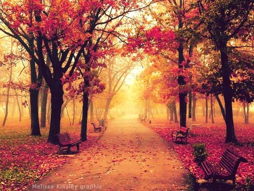 fall toamna autumn (4)
