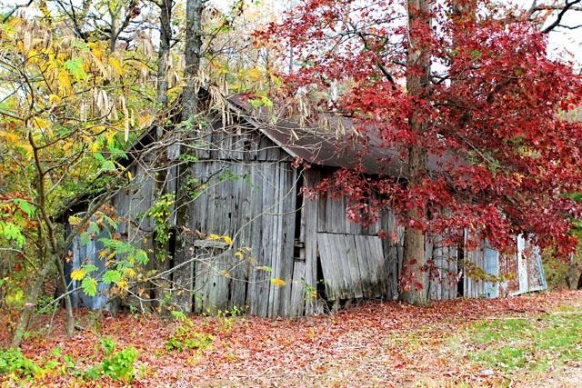 fall toamna autumn (6)