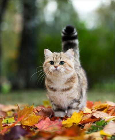 fall toamna autumn (7)